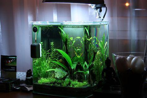20L planted aquarium - very similar to the Fluval Flora kit