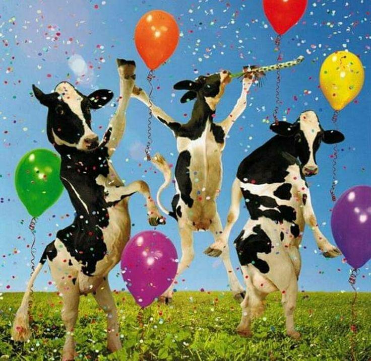хотите поздравления от коровы на юбилей медный