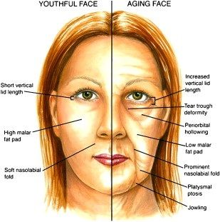 Anti Aging Tips ~ Top 6 Anti-Aging Herbs - Best Anti Aging Herbs To Keep Your Skin Young | Home Remedies http://visagelabs.com