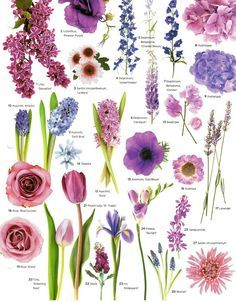 Flowers by color! So nice for wedding planning!