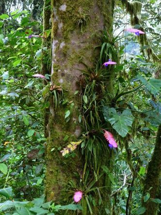 Image result for google images large tropical forest | VaporIz | Pinterest