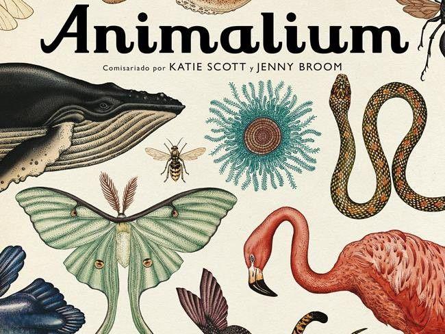 'Animalium', un museo natural en tu biblioteca