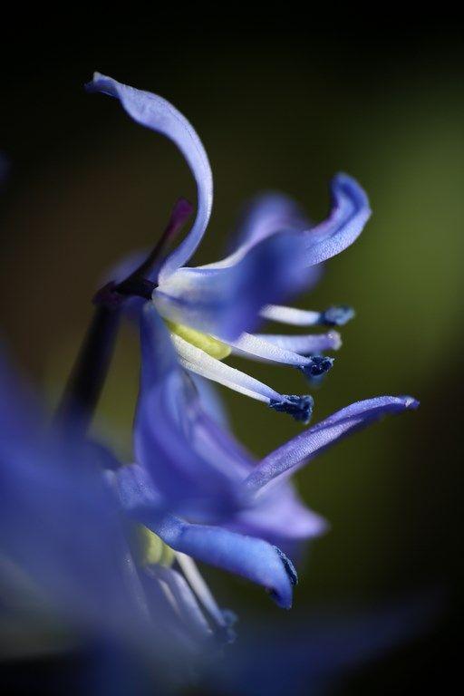 Just flower... :-)