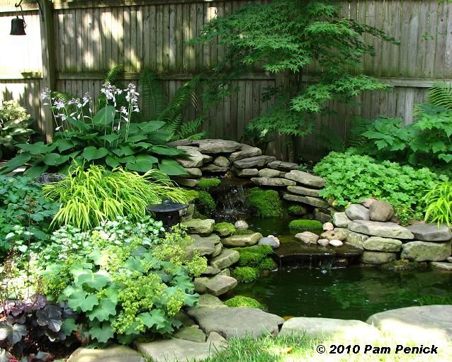 Water feature with numerous perennials (forest grass, ferns, hosta, and heuchera among others) with a japanese maple in the background.  This definitely makes for an appealing area in a shady part of a backyard.