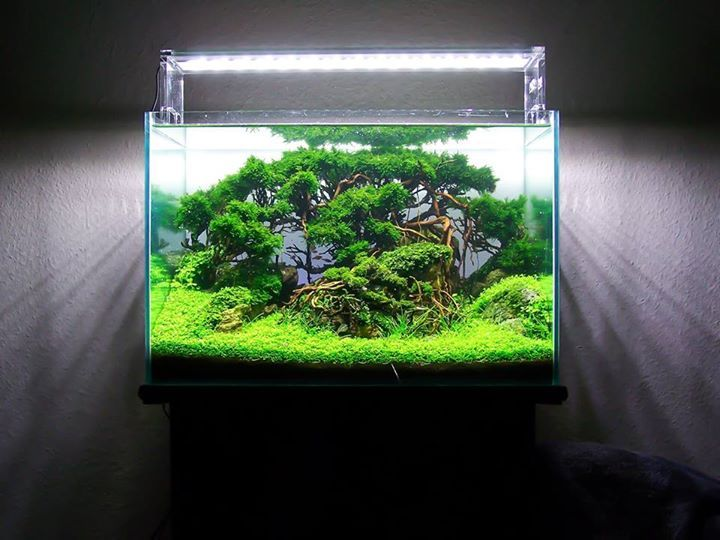Forest Scape By Frederic Fuss... Pin By Aqua Poolkoh