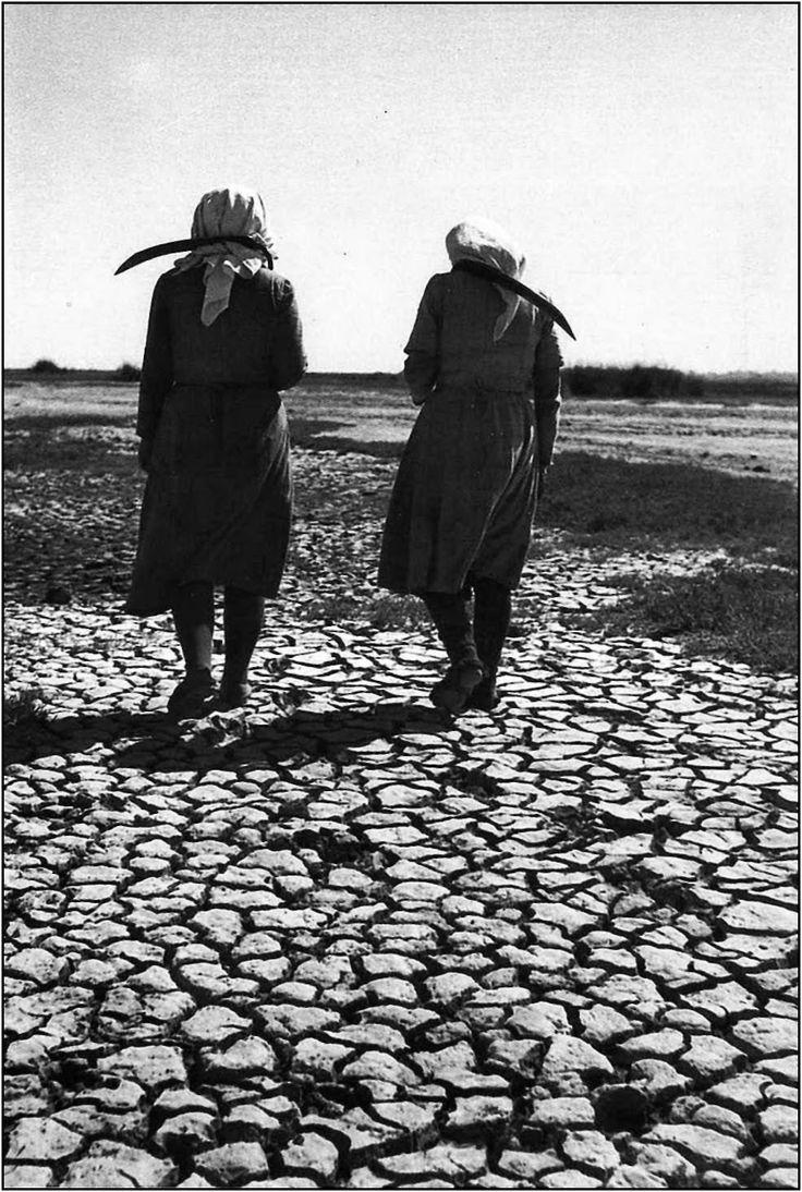 Αγίασμα Νέστου 1950 Σεπτέμβριος Θερίστριες Ορυζώνων φωτ.Δημήτρη Χαρισιάδη
