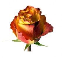 Срезанные цветы - Каталог компаний - GreenCom.ru