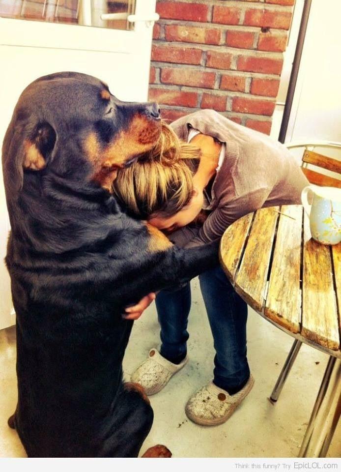 """""""Un perro es la única cosa en el mundo que te quiere más de lo que se quiere a él mismo.""""  Cuántas cosas nos quedan por aprender de estos animalitos..."""