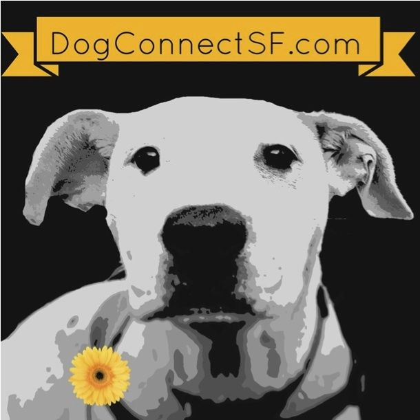 Dog Connect | Cesar Millan training methods can lead to dog abuse