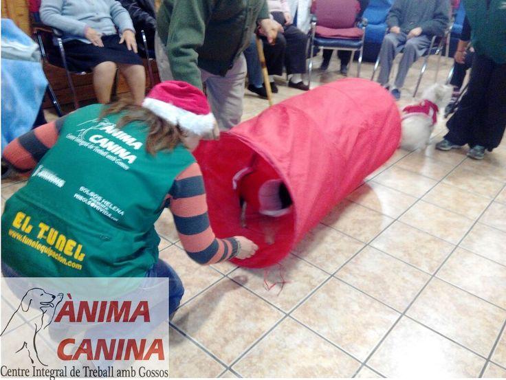#intervencionasistidaconperros #residenciaparapersonasmayores SADA