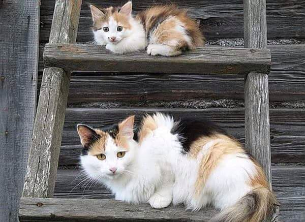 Cat and kitten on the ladder