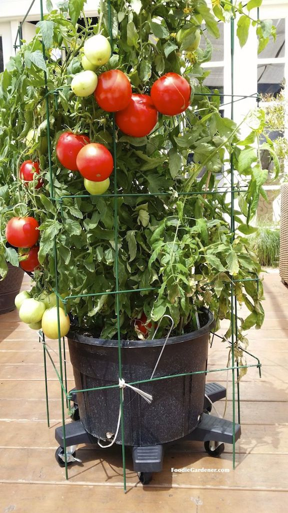 Use plant caddies so you can move your large containers around your patio or deck as needed.