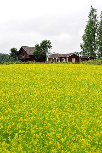rural landscape on the coast of Southern Finland