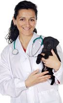 How To Treat Dogs With Hge At Home