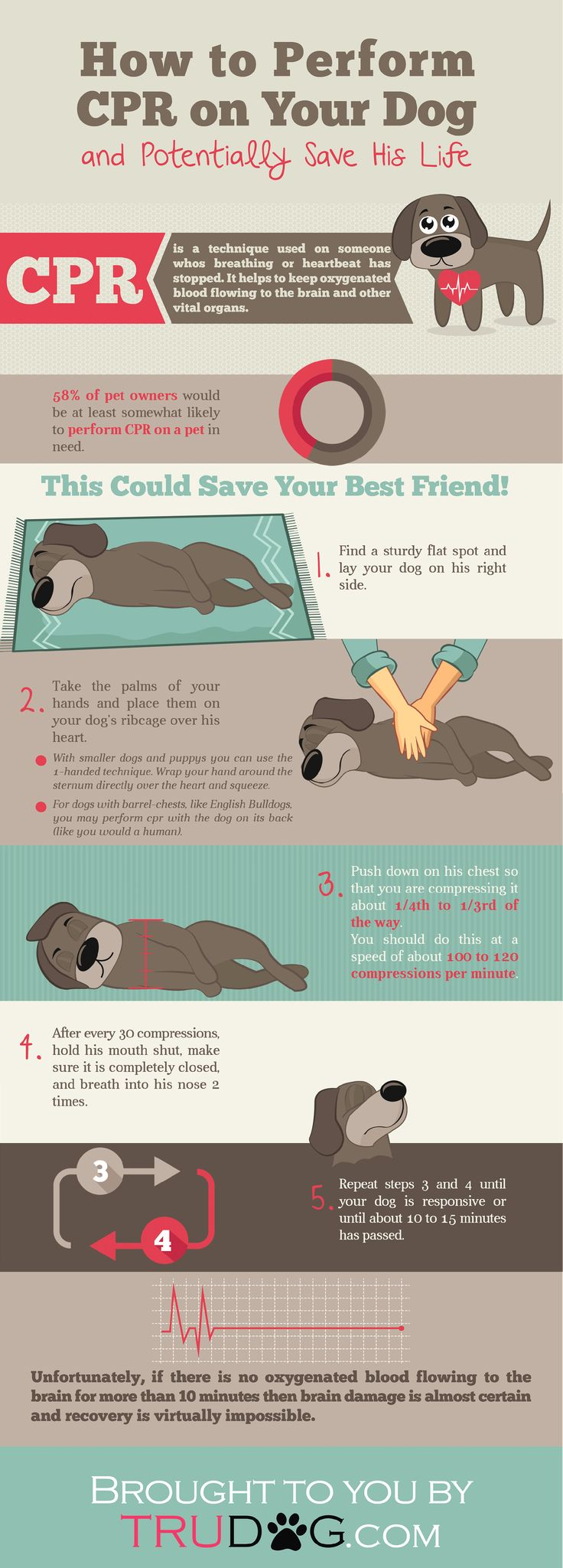 [Infographic] How to Perform CPR on Your Dog #doginfographic