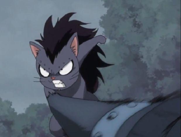 Fairy Tail Gajeel Cat Gajeel as a cat o.o x3...