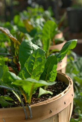 Good tips on how to prepare for Fall Vegetable Gardening, from  The Tasteful Garden