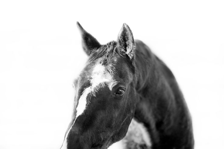 #Equine  Fine Art Print This is a fine art photograph printed on superior quality 220 gsm paper. A high quality,  Fine Art Paper offers a professional, conservation-quality natural white art print with a lightly textured ...