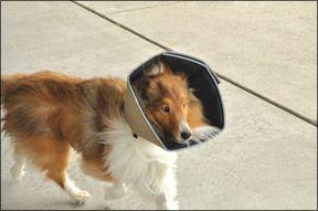 Best 25 Dog Cone Ideas On Pinterest Dog Cone Collar