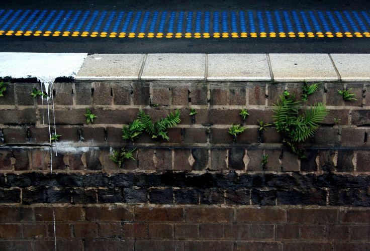 STATION FLORA | Selinah Bull http://www.selinahbull.com