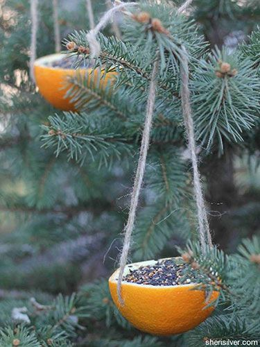 DIY for kids - Orange rind bird feeders. Scoop out the fruit, punch holes for twine, and fill with seed. Then hang.