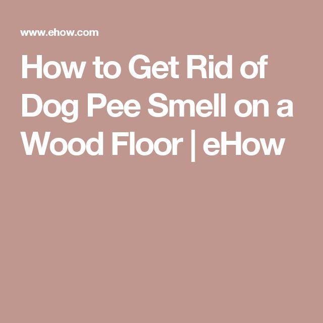 1000 Ideas About Dog Pee Smell On Pinterest Pee Smell