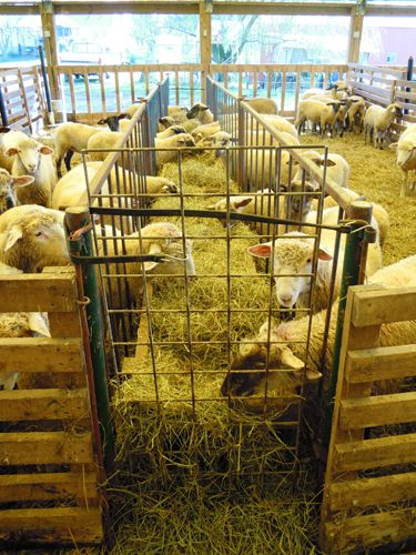 16 Best Images About Livestock Housing On Pinterest