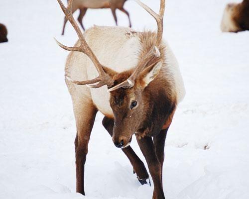 146 bedste Arctic Alaska-billeder på Pinterest Alaska, Arctic And Alaska Usa-6063