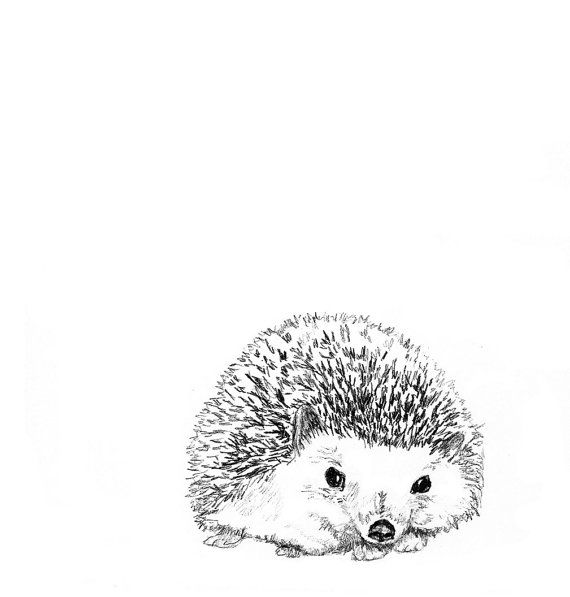 Hedgehog Illustration - Hedgie in Black and White - Hedgehog Art