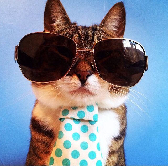 funny cat dressed up - photo #36