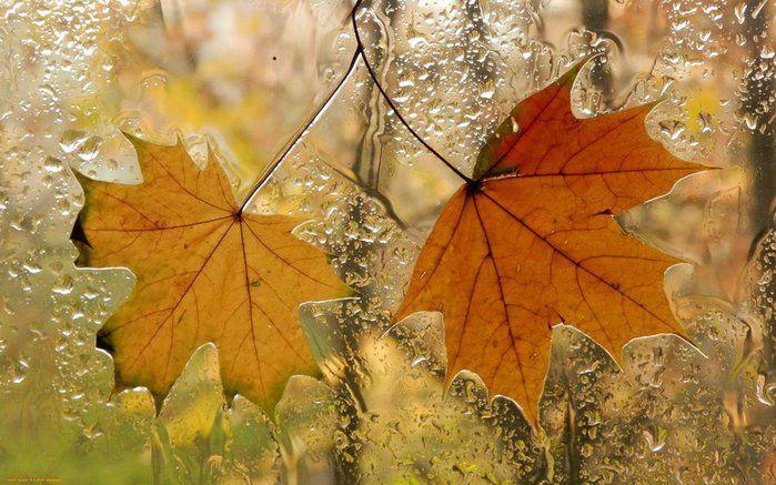 """В окно стучится дождь бездомный, как гость непрошеный в ночи. Не приглашённый и не скромный руками мокрыми стучит Я не даю ему ответа - сегодня мне не нужен гость А он, позвав на помощь ветер, в окно бросает листьев горсть. Один, кленовый, пролетая, прилип к оконному стеклу И по прожилкам я читаю письмо дождя: """"Я Вас люблю!...""""  Наталия Ильичева"""