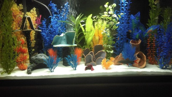 Has anyone made their own decor for your tank? I'd like to make some decorations for one of my tanks if I can afford it, but I don't know where to begin! Does anyone know of aquarium-safe adhesives (i'm thinking just aquarium silicone? Hopefully there's ...