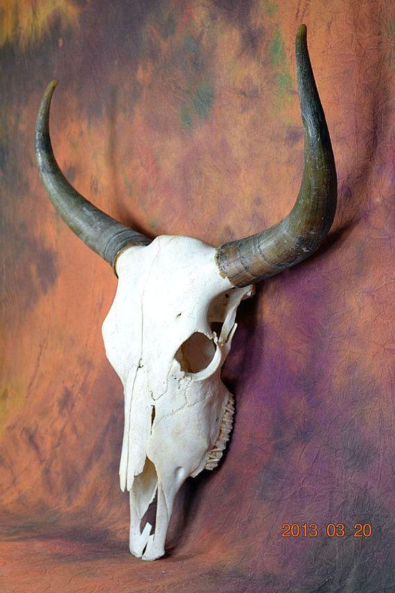 29 Best Images About Decorated Deer Skulls On Pinterest