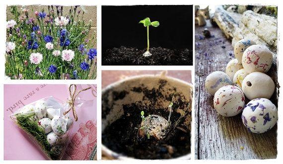 Organic Seed Bombs WildFlower seed bombs by RenaissanceBotanical