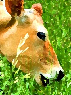 Cellulose can be digested by grass eating animals but not ...