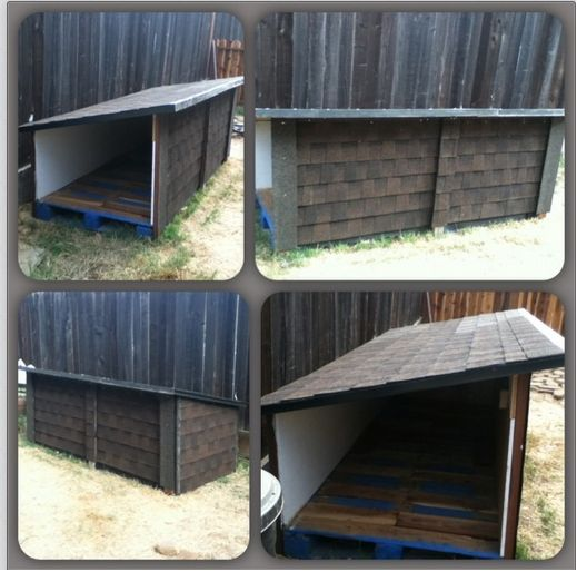 My son and I built a dog house with 2 pallets, 2x4s and plywood. All materials donated. Then someone on Craigslist donated roof tiles and vinyl flooring. A friend was able to cover 2 walls and the roof. Still have to lay the flooring. But at least it is done enough for the rain that just arrived. Now the 3 dogs have shelter whenever they are outside. I think its a job well done.