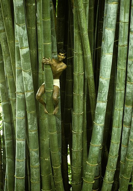 Bamboos at Botanical Garden - Sri Lanka