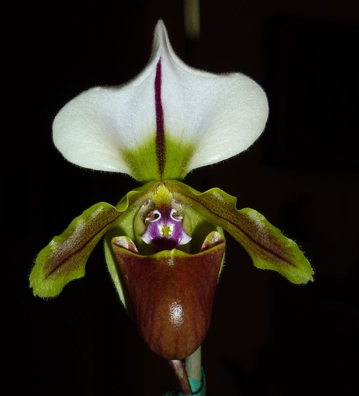Pin On But Orchids Are Very Rare