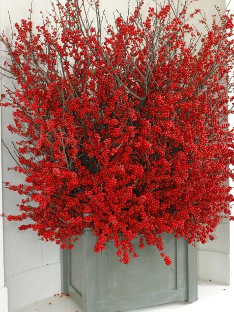 Brilliant red berries take over this pot for Christmas!