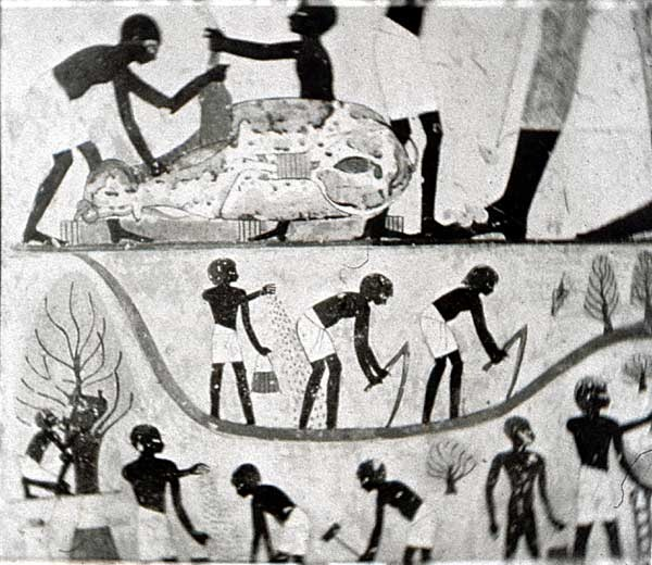 a look at the ancient egyptian farming techniques Ancient egypt, or the egyptian  ancient egyptian agriculture  the easiest way to see how good they were at medicine is to look at the medical papyri which have.
