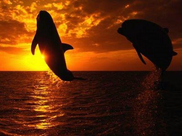 Podmořský svět 1 - Zvířata - Obrázky - PC Tapety na plochu zdarma ...