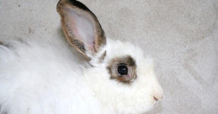 Como saber se seu coelho tem insuficiência renal. Insuficiência renal em coelhos tem crescido nas estatísticas e possui duas categorias: aguda e crônica. Insuficiência renal aguda significa que há um acúmulo de toxinas nos rins. Insuficiência renal crônica ocorre com uma doença que progride ao longo do tempo. Ser capaz de reconhecer os sintomas da insuficiência renal pode permitir que o seu ...