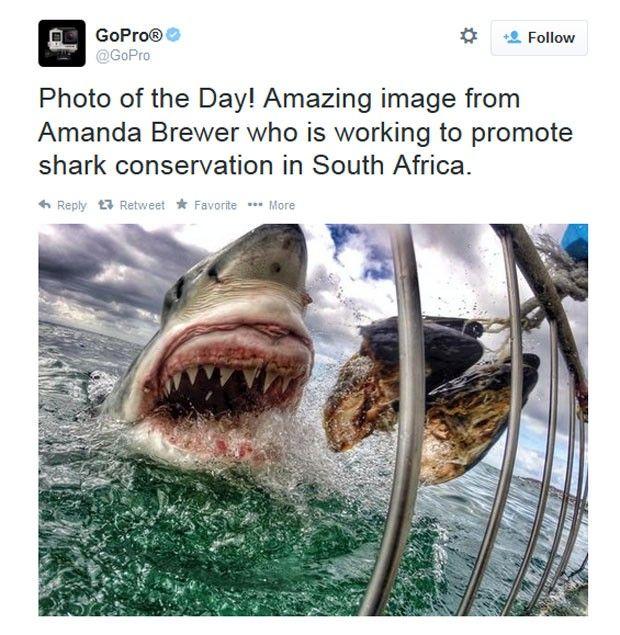 Amanda Brewer registrou uma foto impressionante de um grande tubarão branco atacando uma isca na África do Sul (Foto: Reprodução/Twitter/ GoPro)