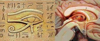 Resultado de imagen para Horus estellar