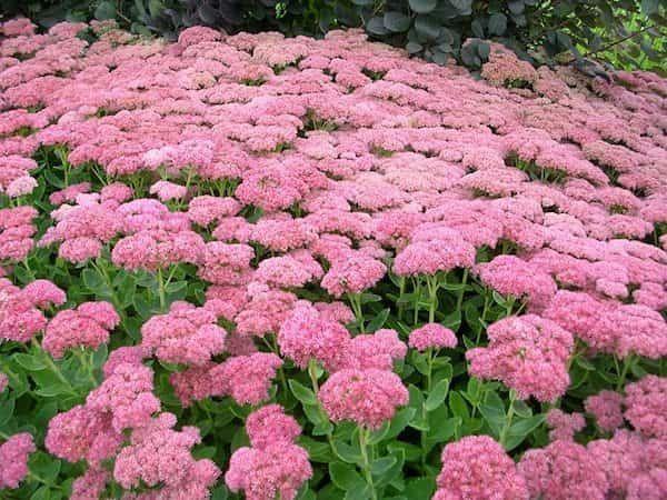 24 Plantes Qui Poussent Dans Votre Jardin SANS EAU (ou Presque). | Idées de jardin fleur ...