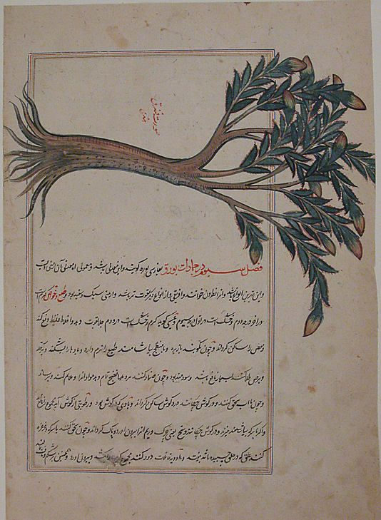 Folio from a Bestiary and Herbal, ca. 1600, Iran, Isfahan