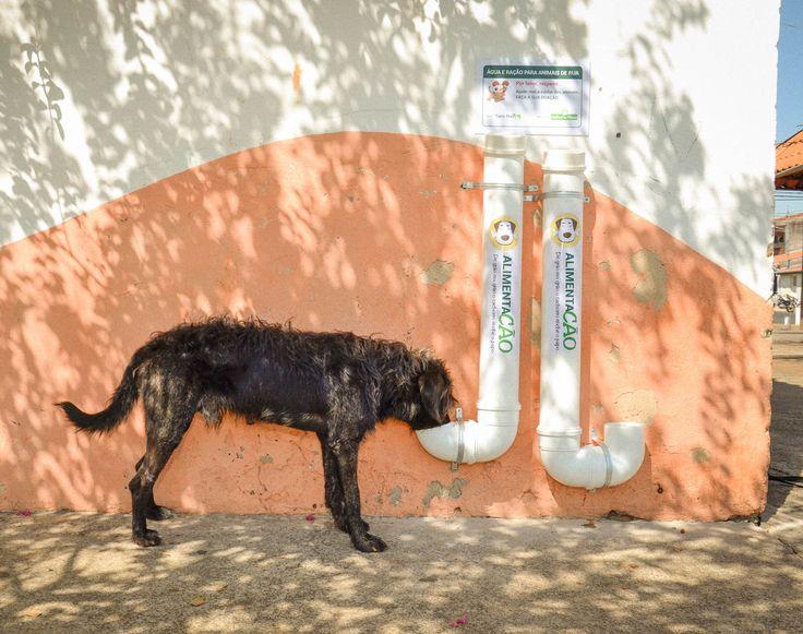 Projeto instala kits de pvc com água e ração p/ animais - http://g1.globo.com/sp/campinas-regiao/noticia/projeto-instala-comedouros-para-caes-abandonados-nas-ruas-de-americana.ghtml Projeto em Americana (SP) pretende alimentar cães e gatos em situação de abandono.