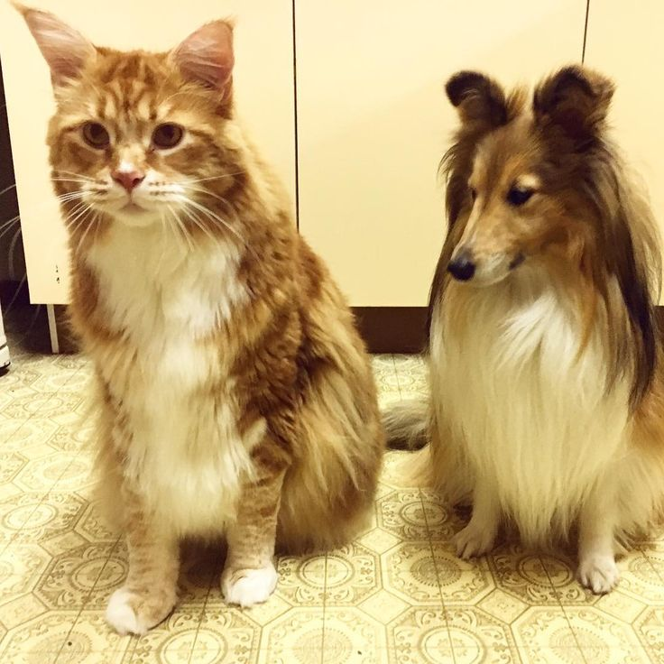 120-сантиметровый кот из Австралии стал звездой Сети (фото) - Новости - Леди Mail.Ru
