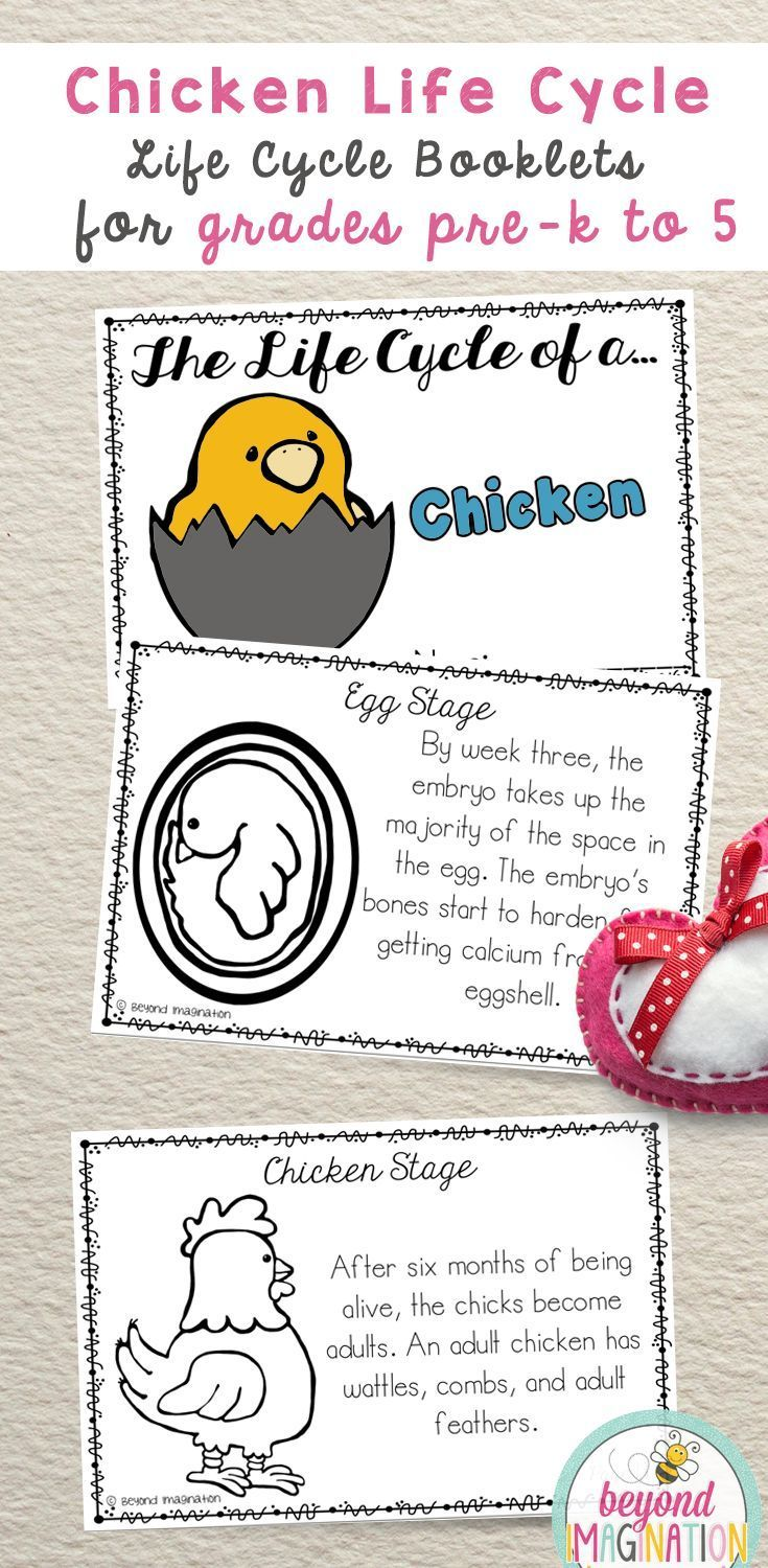Life Cycle of a Chicken | TpT Social Studies Lessons | Pinterest