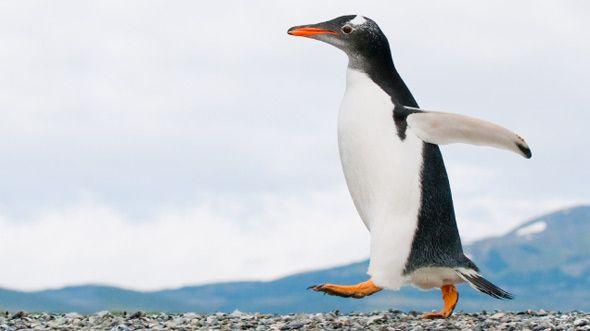 Mottogeburtstag für Jungs: die Polarforscher-Party